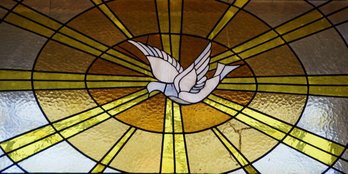Lélekműhely - béke - galamb (Fotó: Pixabay)